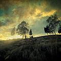 Sunset Trip II by Zapista