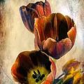 Sunset Tulips by Melissa Bittinger