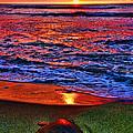 Sunset Turtle By Diana Sainz by Diana Raquel Sainz