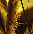Sunset With Reeds by Allen Hrenyk