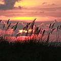 Sunset With Sea Oats by Shari Bailey