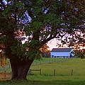 Sunset With Tree by Joseph Skompski