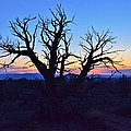 Sunset With Tree Silhouette by David Knowles