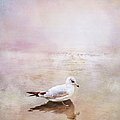 Sunset With Young Seagull by Theresa Tahara
