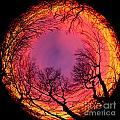 Sunset World Of Trees by Terri Morris