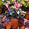 Sunshine And Flowerpots by David Lloyd Glover