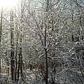 Sunshine And Snow by Katerina Naumenko