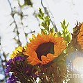 Sunshine And Sunflowers by Alanna DPhoto