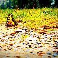 Sunshine Butterfly by Alicia Forton