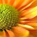 Sunshine by Deb Halloran