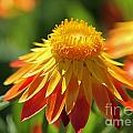 Sunshine Flowers by Emma England
