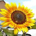Sunshine In Country Farm by Lingfai Leung