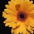 Sunshine by Lisa Wagner