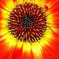 Sunshine by Nona Kumah