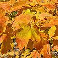 Sunshine Of Fall by Brenda Brown