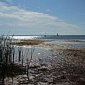 Sunshine On The Bay by Susan Wyman