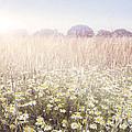 Sunshine Over The Fields by Natalie Kinnear
