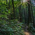 Sunstar Along The Trail by Barbara Bowen
