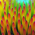 Super Macro Of Echinacea Cone Flower by Ernie Echols