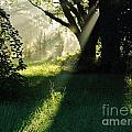 Super Sunbeam by D Hackett