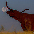 Supermoon On The Ranch by Kelli Brown