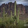 Superstitious Cactus II by Richard Fernandez