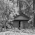 Sureal Gothic Infrared Woodlands Haunting Spooky Eerie Old Building With Black Ravens by Kathy Fornal