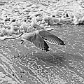 Surf And Wings by David Rucker