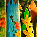 Surf Boards by Wingsdomain Art and Photography