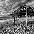Surf Shack - Black And White by Peter Tellone