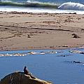 Surf Watching Squirrel by Jennifer Robin