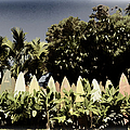 Surfboard Fence - Old Postcard by Paulette B Wright