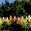 Surfboard Fence - Right Side by Paulette B Wright