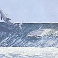 Surfing Dolphins by Richard  Ellis