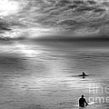 Surfing With The Dolphin by Artist and Photographer Laura Wrede