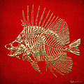 Surgeonfish Skeleton In Gold On Red  by Serge Averbukh