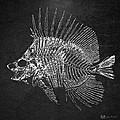 Surgeonfish Skeleton In Silver On Black  by Serge Averbukh