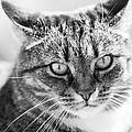 Surprised Cat by Hakon Soreide