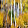Surreal Aspen Tree Magic Abstract Art by James BO  Insogna