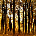 Surreal Autumn by Kim Hojnacki