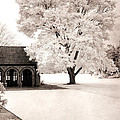 Surreal Dreamy Ethereal Winter White Sepia Infrared Nature Tree Landscape by Kathy Fornal