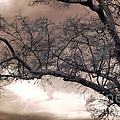Surreal Fantasy Gothic South Carolina Oak Trees by Kathy Fornal
