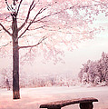 Surreal Infrared Dreamy Pink And White Park Bench Tree Nature Landscape by Kathy Fornal