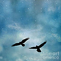 Surreal Ravens Crows Flying Blue Sky Stars by Kathy Fornal