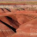 Surreal Red Landscape by Nadalyn Larsen