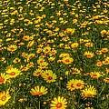 Surreal Spring by Erez Anshel
