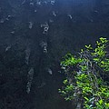 Surreal Stalactites At The Camuy Caverns by Sandra Pena de Ortiz