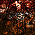 Surrounded By Autumn by Thomas Woolworth