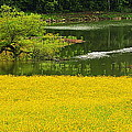 Susans Gold Pond by Kathy Barney