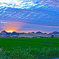 Sutter Buttes Sunset Ray Burst In The Rice Fields  by Michelle Zearfoss